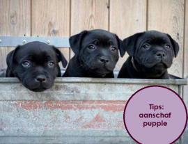 Tips aanschaf puppy